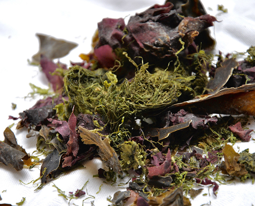 Human Nutrition Seaweed